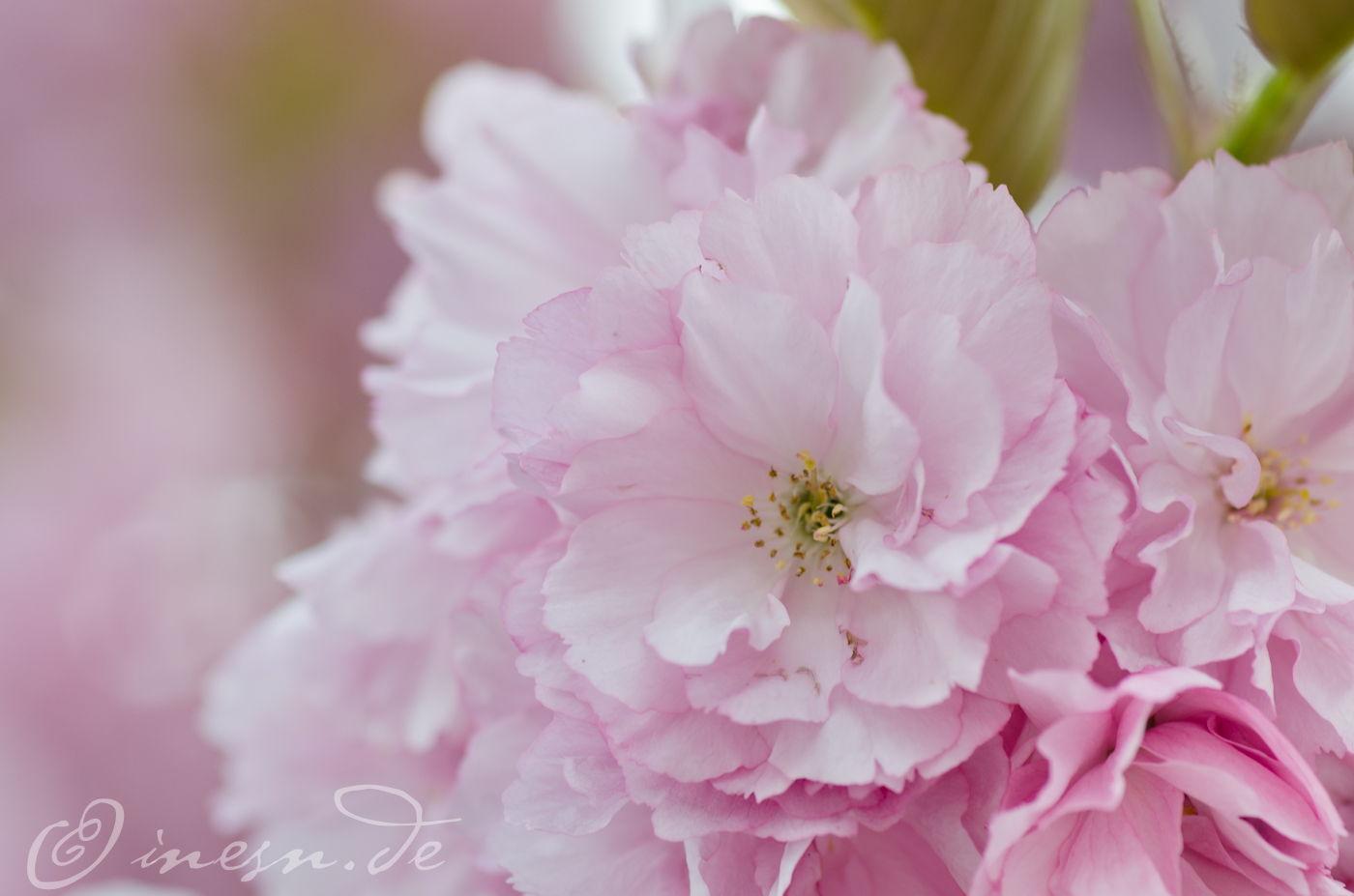 Blüten ~ fotografiert von Ines