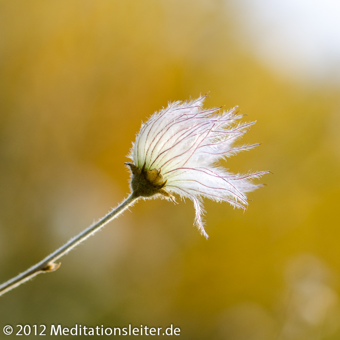 Blume im Botanischen Garten Berlin