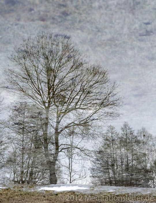 Baum gespiegelt im Eis