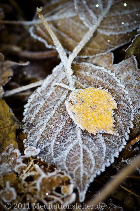 Blätter mit Raureif