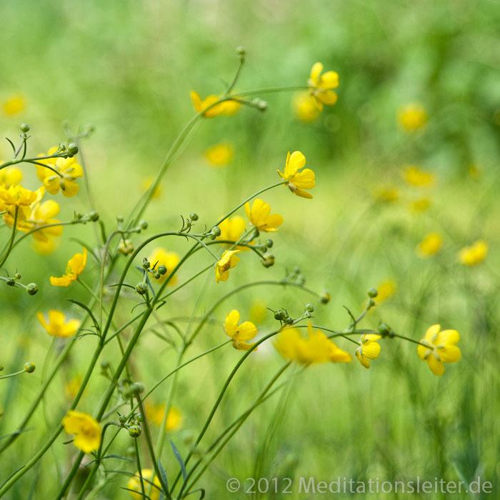 Butterblume - Fotografie von inesn.de