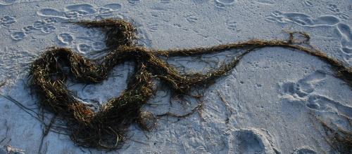 Ein Herz im Sand