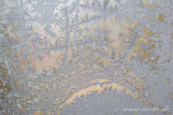 Eisblumen, fotografiert von Ines -inesn.de