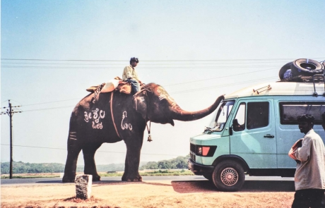 Begrüßung von einem Elephant auf meiner Reise in Indien