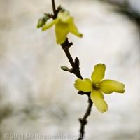 Ein kleiner Frühlingsgruss