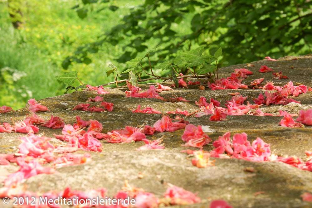 Kastanienblüthe