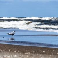 Meeres~Meditation