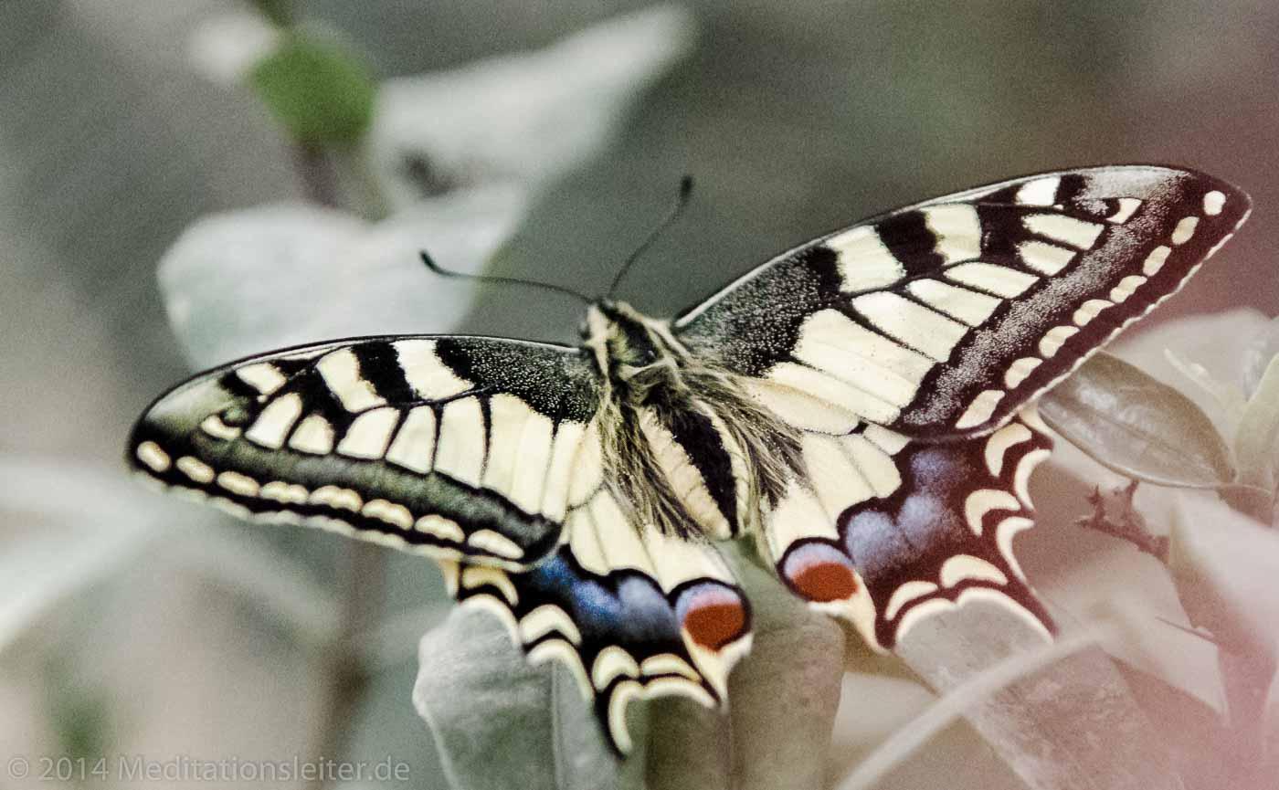 Ein Schwalbenschwanz-Schmetterling